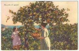 RACCOLTA DI AGRUMI - Récolte Des Agrumes - Brunner 21795 - Cultivation