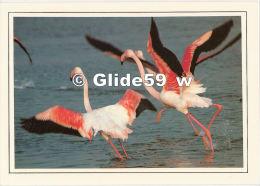 Art Et Nature - Envol De Flaments Roses - N° 25 - Oiseaux