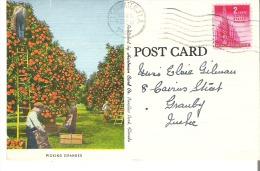 Picking Oranges In Florida - Verenigde Staten
