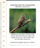 Chevechette D´Europe / Bird Owl Oiseau Hibou Chouette / Faune Forêt Alpes Vosges Jura  / IM 126/25 - Altri