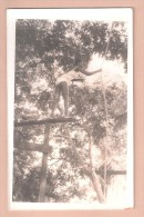 RP NIGERIA  Woman ETHNIC Rope Climbing AFRICA PLAIN BACK POSTCARD NIGERIA WRITTEN IN PENCIL TO THE BACK  2 Of 4 - Nigeria