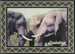 PhotoSafari Postcard, Zimbabwe, Elephants, 128 - Zimbabwe
