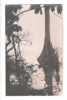 RP  SAID TO BE GOLD COAST Ghana COUPLE OF NATIVES TALL TREE IN WATER UNUSED CARD 1 OF 7 - Ghana - Gold Coast