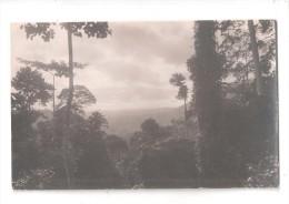 RP  SAID TO BE GOLD COAST Ghana TREES JUNGLE   UNUSED  CARD 2 OF 7 - Ghana - Gold Coast