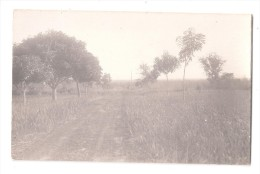 RP  SAID TO BE GOLD COAST Ghana ROAD DIRT TRACK AND NATIVE TREES UNUSED  CARD 3 OF 7 - Ghana - Gold Coast