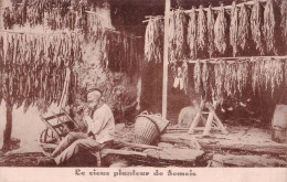 Le Vieux Planteur De Semois - Plantations F. DIDOT Et FILS - Rochehaut --- Frahan Sur Semois - - La-Roche-en-Ardenne