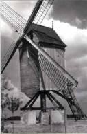 HERENTHOUT (Prov. Antw.) Molen/moulin - Prachtige Close-up Van De Verdwenen Molen Van Snoeys ±1950 - Herenthout