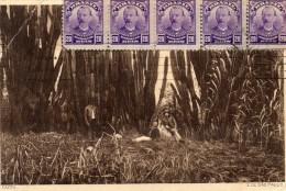 CPA -  CACTO - SAO PAULO -  Cia Céramica Industrial - Osasco SP -  Destinataire Aubert à Kédougou - Sénégal.  1914 - São Paulo