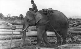 Thailande - Éléphant Au Travail - Thailand
