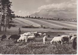 (SL13) SLOVAQUIE. VYSOKE TATRY. BERGERS - Eslovaquia