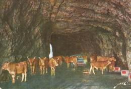 Route Du Col D´AUBISQUE - Corrida En Slalom Dans Le Tunnel - Peugeot 404 - France