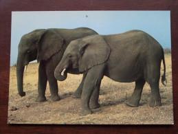 Jonge SAVANNAH Olifanten - 19?? ( Zie Foto Voor Details ) !! - Éléphants