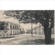 SDMTP0667C-LFTD4958TPARB. TARJETA POSTAL.Papeleria Blanco Y Negro.Arbol.fuente Edificios Y Tranvia - Flores, Plantas & Arboles