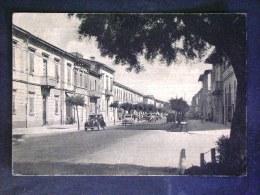 TOSCANA -PISA -MARINA DI PISA -F.G. LOTTO N°394 - Pisa