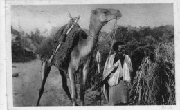 AFRICA ORIENTALE ITALIANA  , Eritrea ,  Cammelliere  Somalo - Erythrée