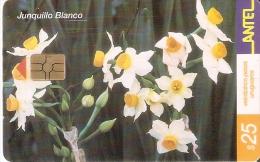 Nº 228 TARJETA DE URUGUAY DEL JUNQUILLO BLANCO (FLOWER-FLOR) - Uruguay