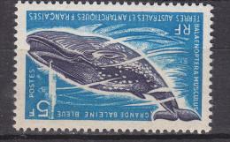 TAAF     N° 22- Belle Gomme D´origine....... COTE :31 Euros - Unused Stamps