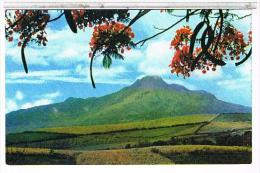 MARTINIQUE  LA  MONTAGNE  PELEE  VUE   DU  MORNE  AUX  BOEUFS   CPM   TBE  1O207 - Martinique