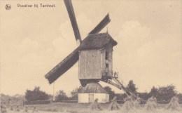 Vosselaar Bij Turnhout, Molen - Moulin - Vosselaar