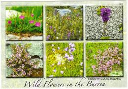 Wild Flowers In The Burren, County Clare -  Ireland / Eire - Clare