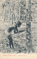 Tapping Rubber, Ceylon (Half Spiral System). Plate & Co. - Sri Lanka (Ceylon)