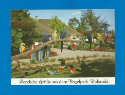 Vogelpark Walsrode  (A31) , Ara - Freianlage - Neu - - Walsrode