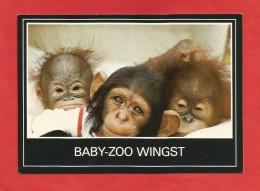 Cuxhaven / Wingst  (A39) , Baby-Zoo Wingst - Neu - - Cuxhaven