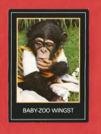 Cuxhaven / Wingst  (A40) , Baby-Zoo Wingst - Neu - - Cuxhaven