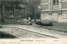 CPA  - Antwerpen - Anvers - Antwerp - Jardin Zoologique - HIPPOPOTAMES  - Édition  HERMANS - Non Circulée  - TTBE - Antwerpen