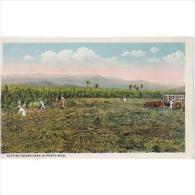 EUDTP0774C-LFD1977TFPA.TARJETA POSTAL DE ESTADOS UNIDOS(USA) Recolectando Caña De Azucar.PUERTO RICO. - Flores, Plantas & Arboles