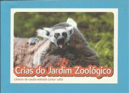 Lémur-de-cauda-anelada ( Lemur Catta ) Primate - Crias Do Jardim Zoológico - Lisbon ZOO Lisboa - Portugal - Animaux & Faune