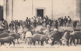 2B - Haute Corse - ZILIA - Bénédiction Des Cochons LL 36 - France