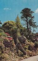 Tresco Gardens,Scilly, S13. - Scilly Isles