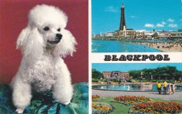 Multi View Of Blackpool, Posted With Stamp, S14. - Blackpool