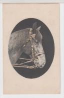CHEVAL - Portrait - Pferde