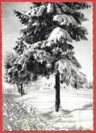 CARTOLINA VIAGGIATA GERMANIA - BUON NATALE - Frohe Weihnachten - ANNULLO MUNCHEN 1963 - Natale
