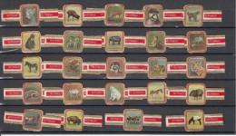 Sigarenbandjes  Nr 1  Tm 24  Compleet : Animals, Diren, Fauna, Horse, Icebear, Zebra - Sigarenbandjes