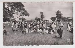 GUINEE - DALABA - Marché Aux Bestiaux - French Guinea