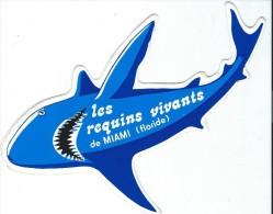 Miami/Floride / USA/ Les Requins Vivants  / Vers 1985     ACOL74 - Stickers