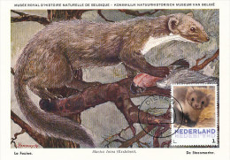D18345 CARTE MAXIMUM CARD 2013 NETHERLANDS - MARTEN FOUINE CP MUSEUM ORIGINAL - Stamps