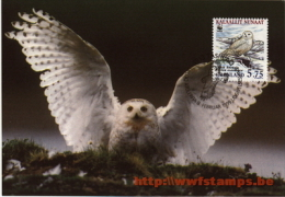 50% DISCOUNT WWF - GREENLAND - 1999 - Local Maxi Card - Maxi Card Issued By Local Post Administration - Fluor Stamps - Ohne Zuordnung