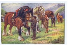 TUCK'S POSTCARD 1910s - HORSE - PARADE OF CHAMPION CLYDESDALES - N.3109 - Illustrateurs & Photographes