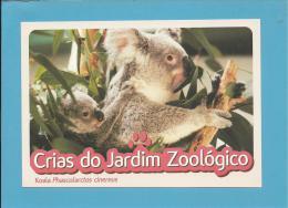 Koala ( Phascolarctos Cinereus ) - Crias Do Jardim Zoológico - Lisbon ZOO Lisboa - Portugal - Andere