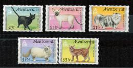 (cl 27 - P9) Montserrat ** N° 771 à 775 - Chats - - Montserrat