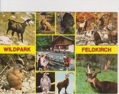 Wildpark Feldkirch. Vorarlberg - Animales