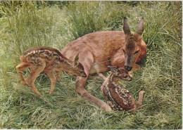 Rehkitzen Kurz Nach Der Geburt. Chevreaux. Newly-born Fawns, Cervatillos Recien Nacidos - Animales