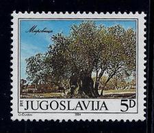 Yugoslavia 1984: Old Olivetree. MNH (**) - 1945-1992 Repubblica Socialista Federale Di Jugoslavia