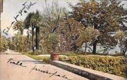 [DC5581] CARTOLINA - IL LAGO MAGGIORE ILLUSTRATO - GIARDINI ISOLA MADRE -  Old Postcard - Verbania