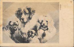 [DC5584] CARTOLINA - CANI - FIRMATA DALL'ILLUSTRATORE CARL REICHERT - Old Postcard - Chiens