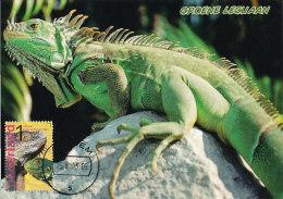 D18510 CARTE MAXIMUM CARD FD 2013 NETHERLANDS - IGUANA BURGERS ZOO CP ORIGINAL - Reptiles & Amphibians